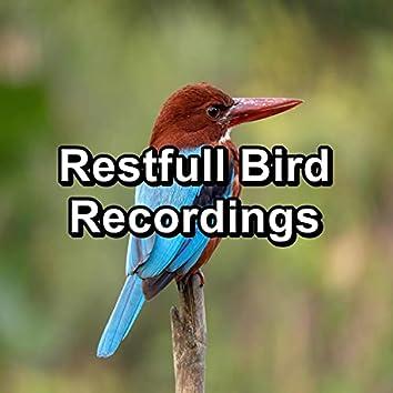 Restfull Bird Recordings