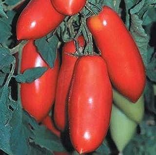 Tomato - Medium And Large Super Marzano Plus 1,000 seeds