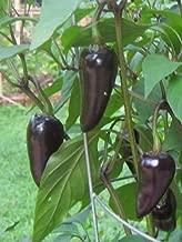 czechoslovakian black pepper