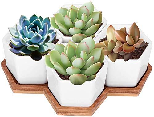 Duokon Maceta de cerámica Bandeja de bambú Bandeja de Plantas suculentas Recipiente para Plantas de Cactus de Flores Plantación suculenta (4 Piezas)