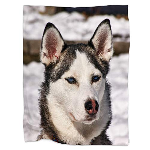 Swono Dog Throw Blanket,Siberian Husky Dog Black and White Colour with Blue Eyes in Winter and Snow-01 Thorw Blanket Soft Warm Decorative Blanket for Bed Couch Sofa Office Blanket 40'X50'