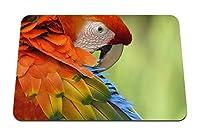 26cmx21cm マウスパッド (オウム羽色カラフル鳥) パターンカスタムの マウスパッド