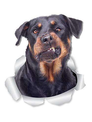 Winston & Bear Divertente Rottweiler Dog Decalcomanie da Parete – Confezione da 2 – Rottie 3D Decalcomanie per pareti, Auto, WC e Altro – Regalo Rottweiler
