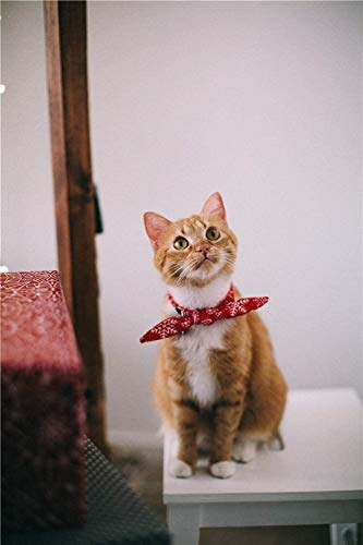 Puzzel for Volwassenen 1000 Stuks Puzzels, Orange-Tabby-Cat-Met-Red-Zakdoek-Sitting-On-White, Kan cultiveren geduld en concentratie ( Size : 1000 Pieces (75*50cm) )