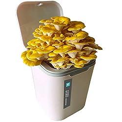 HLLXX Flippiges Gemüse-Kit, 6 außergewöhnliche Gemüse zum Selbstzüchten, Austernpilzkultur Zuchtset, Etwa 15-20 Tage, Ideales Geschenkwhite-Elm Mushroom