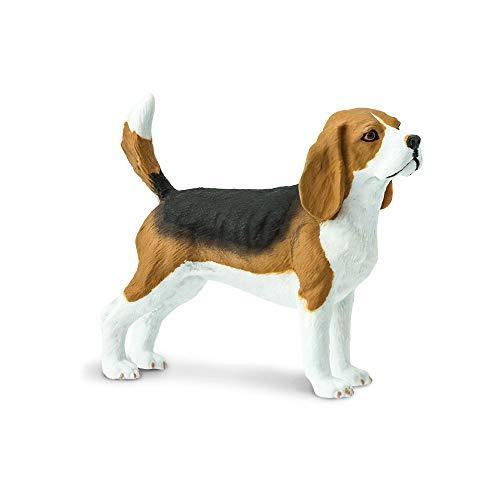 Safari 254929–Hund Beagle