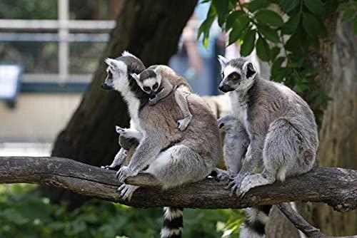 FFCLZ Patrón de Familia de lémures Animales Puzzles,Jigsaw Puzzle,Adult Green Wooden Puzzle/Rompecabezas para Adultos/Puzzle 1500 Piezas