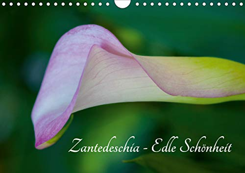 Zantedeschia - Edle Schönheit (Wandkalender 2021 DIN A4 quer)