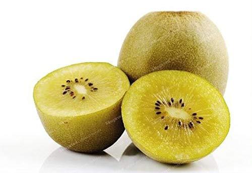 SANHOC Kiwi Frais Bonsai 100% réel Actinidia chinensis Bonsai Valeur nutritionnelle élevée Bio Bonsai Balcons Fruits des Plantes 100 pcs/Sac: 5