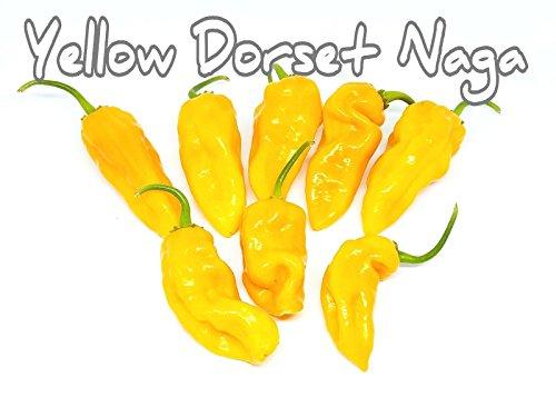 (25+) Yellow Naga Dorset Pepper Samen Hot