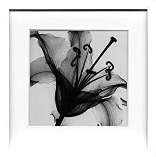 X-Ray PHOTOGRAPHY(レントゲンフォトグラフィー)ポスターフレーム Steven N.Meyers / Lily muscadet 330x...