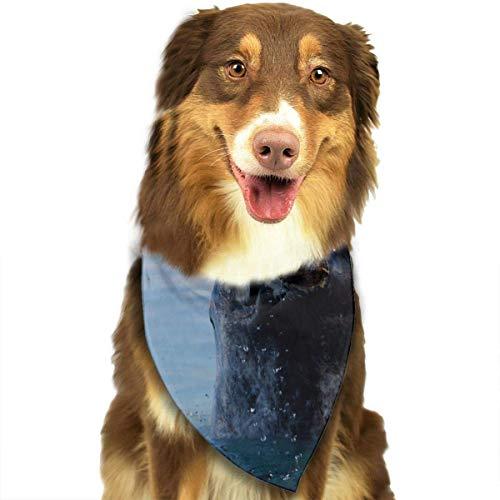 hgdfhfgd Narwhals Fashion Dog Bandana Haustierzubehör Easy Wash Schal