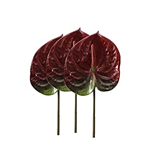 DODXIAOBEUL 3 PCS 27″ Artificial Anthurium Lily Flowers for Home Decor Bouquet and Green Leaf for Home Decoration Bridal Wedding Festival Decoration Small Flower Flower Arrangement