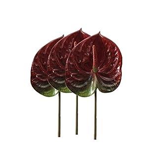 DODXIAOBEUL 3 PCS 27″ Artificial Anthurium Lily Flowers for Home Decor Bouquet and Green Leaf for Home Decoration Bridal Wedding Festival Decoration Small Flower Flower Arrangement
