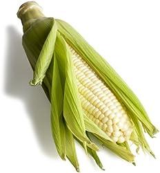 White Corn, 1 Ear