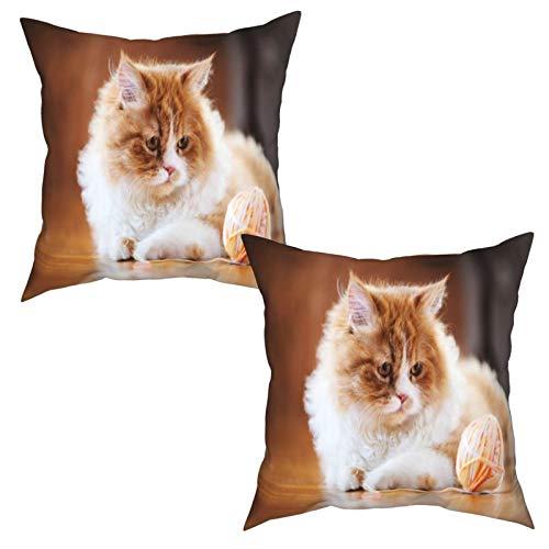 Gggo 2 Piezas Fundas de Cojines el Gato es Curioso Suave Almohada Decorativo para Habitacion Sofá Dormitorio Oficina Sala-50x50cm