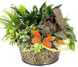 Sympathy Garden - Same Day Sympathy Flowers Delivery - Sympathy Flower - Sympathy Gifts - Send Online Sympathy Plants & Fl...
