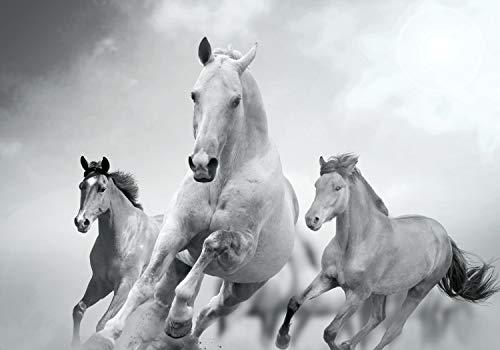 wandmotiv24 Fototapete Pferde laufen in Weiß und Schwarz S 200 x 140cm - 4 Teile Fototapeten, Wandbild, Motivtapeten, Vlies-Tapeten Tiere, Pferd M0945