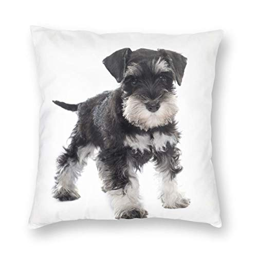 LiBei Cushion Cover Decorative Throw Pillow Cover Black Puppy Miniature Schnauzer In Front Of Dog Pet Animal Sofa Car Square Pillowcase for Home Bed Decor 50x50cm