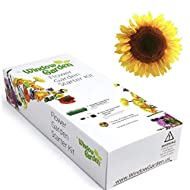 Window Garden - Mammoth Sunflower Flower Starter Kit - Grow Your Own Beauty. Germinate Seeds on Your Windowsill Then Move to Planter or Beds. Mini Greenhouse System Make's it Foolproof, Easy and Fun.