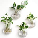 Mkono Wall Hanging Glass Terrariums Planter Oblate Flower Vase for Hydroponics Plants, Home Office Living Room Decor, Set of 4