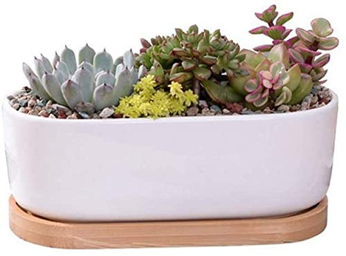 Olla de cerámica suculenta pequeña flor blanca oval suculenta en maceta moderna redondo de cerámica de diseño para la tina cuenca cuenco suculenta Maceta Cactus crisoles de flor decorativo,Bamboo Tray