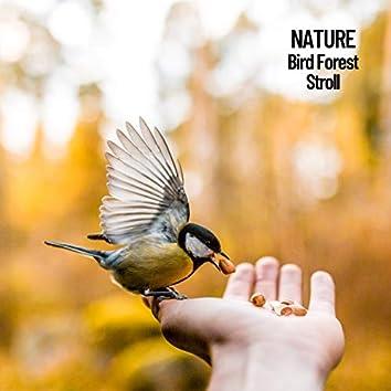 Nature: Bird Forest Stroll