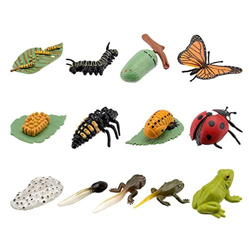 NUOBESTY 3 Sets Tierlebenszyklus-Modelle, Schmetterling, Marienkäfer, Frosch, Lebensstufen, Figuren, Kinder, Lernen, Lehren, Insektenwachstumszyklus, Modellspielzeug