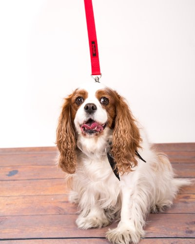 The Jenny Dog Leash for Blind Dogs
