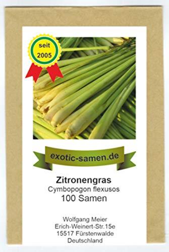 Zitronengras, Lemongrass - Cymbopogon flexusos - 100 Samen