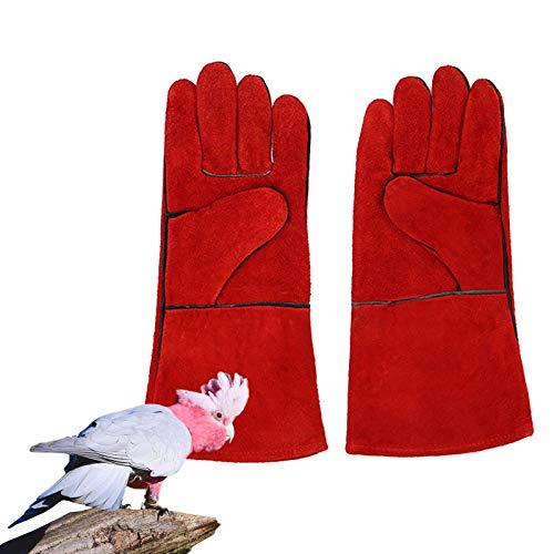 LY-Rack Kakadu-Tierkratz- / Bissbeständige Schutzhandschuhe mit Schwefelhaube, Robuste, bissfeste Handschuhe für Katze/Vogel/Schlange/Papagei/Eidechse/Reptil (Color : C)