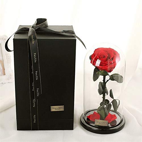 Rose enchantée de la Belle et la Bête sous cloche - Rose préservée 100 % naturelle a