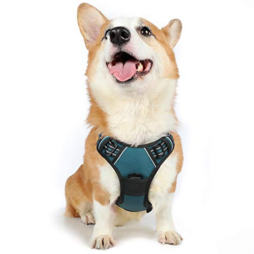 rabbitgoo Dog Harness, No Pull Harness for Medium Dogs, Adjustable Dog Vest Harness with Front & Back Leash Clips, Reflective Pet Harness Soft Padded with Easy Control Handle (Teal, Medium)