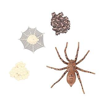TOYANDONA 昆虫のライフサイクルフィギュアリアルな昆虫フィギュアおもちゃは子供スパイダーのための動物科学の茎のおもちゃの変態を示しています