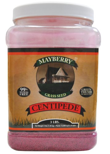 Mayberry Centipede Seed, 3-Pound