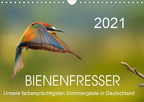 Bienenfresser, unsere farbenprächtigsten Sommergäste in Deutschland (Wandkalender 2021 DIN A4 quer)
