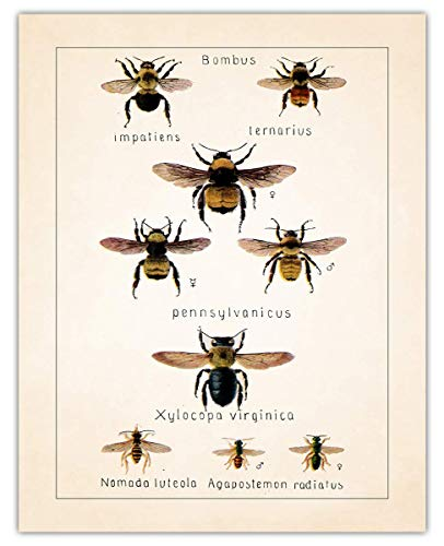 Vintage Bees Wall Art Print - (11x14) Photo Unframed Make Great Room Wall Decor Gift Idea Under $15
