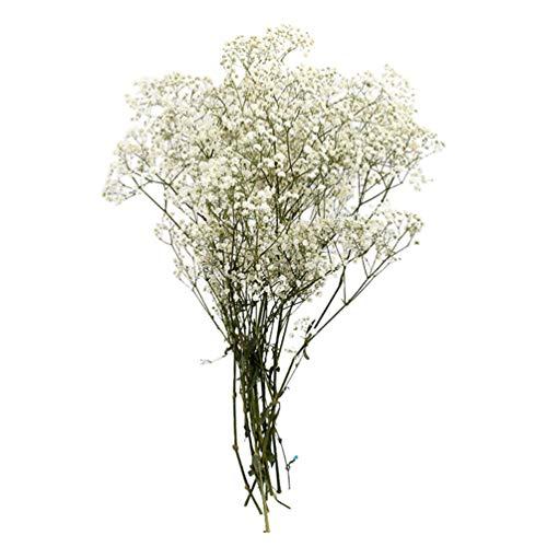 LIOOBO Flores Secas de Gypsophila Ramo de Gypsophila 19.7 - Flores de Aliento de Bebés para La Decoración del Hogar de La Boda