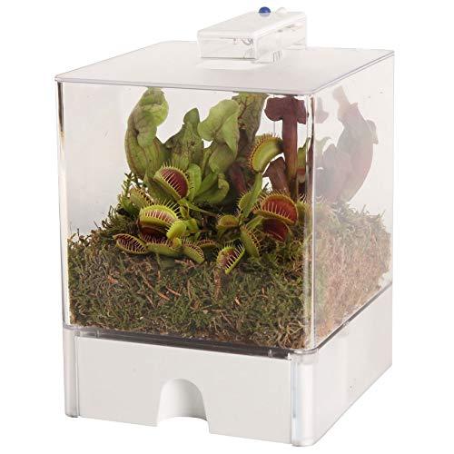 Swampworld Terrarium - Inklusiv 3 Fleischfressende Pflanzen und Moos - Hat 2-farbige Beleuchtung, Blau und weiß - 15x15x23 cm