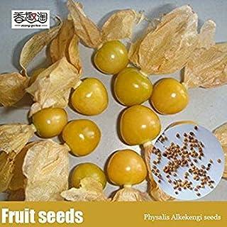 100pCS fácilmente identificables Semillas Semillas Physalis Alkekengi, Linterna China de Frutas, Semillas de Plantas herbáceas perennes de Cereza de Invierno
