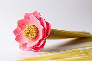 Qualy QL10158P Lotus Spaghetti Maß / Portionierer, rosa