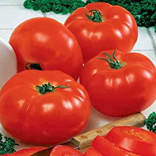 Park Seed Big Beef Hybrid Tomato Seeds, Includes 30 Seeds in a Pack