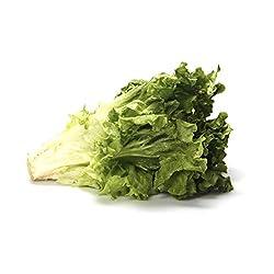 Lettuce Green Leaf Organic, 1 Each