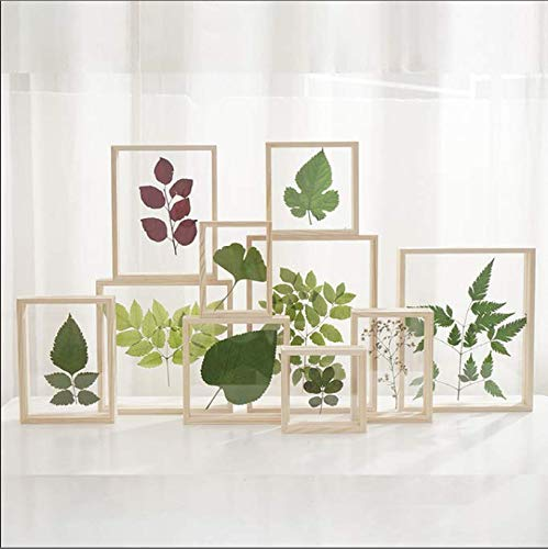 Marco de fotos de plantas de vidrio de doble cara creativo de madera Marco de fotos Color de registro Marco de fotos estéreo Marco de fotos de madera transparente 11.4 * 16.4cm