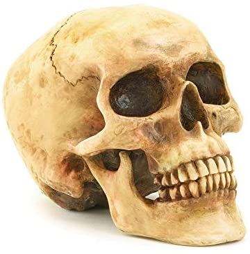 Indiana jones alien skull _image3