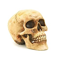 "The skull weighs 0.8 lbs and measures 6.5x4.25x4.6"" Made from lightweight and sturdy handcrafted Polyresin that captures exact anatomic detail to make the piece resiliant and macabre Can be used as seasonal Halloween table décor or to adorn a year-ro..."
