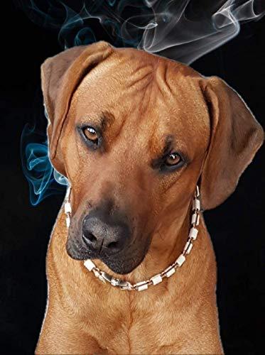 Pfoetchen-Welt Maßanfertigung! Schmuckhalsband für Hunde. Jetzt auch mit Namen. EM Keramik Halsband, Effekitve Mikroorganismen Produktbeschreibung beachten!