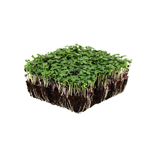 Organic Basic Salad Mix Microgreens Seeds - 8.5 Gram Packet - Use for Indoor Gardening, Growing Micro Greens & More | Micro Greens Salad Garden Seeds