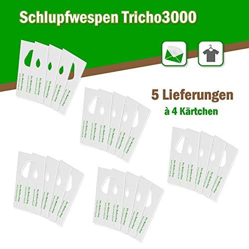 Schlupfwespen gegen Kleider-/ Textilmotten 5 Lieferungen á 12.000 Stück auf 4 Kärtchen