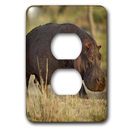 Einzelne Duplex-Wandplatte, Steckdosen-Wandplatte, Tansania, Serengeti, Moru Kopjes, Nilpferd – Af45 Jmc0030 – Joe und Mary Ann McDonald 2 Steckdosen-Abdeckung